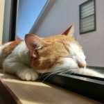 受験勉強における正しい睡眠時間