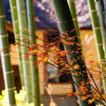 参考書の使い方:段階式 日本史論述のトレーニング